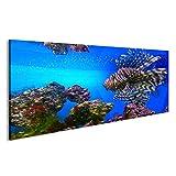 bilderfelix Bild auf Glas Acrylglas Bilder Lionfish Feuerfisch Aquarium schwimmt unter Wasser, Deko, Wanddeko
