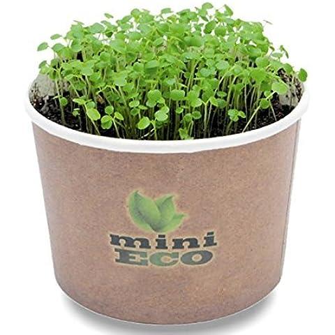 SpiceHomey Kit de Cultivo de Hierbas - Berro Regalo Orgánico. Cultive sus Hierbas Frescas en el Alféizar. Bio Producto 100% Orgánico Nasturtium Officinale