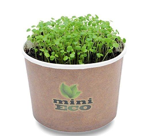 Brunnenkresse Keimsprossen Microgreens Kräuter PflanzSet. Hoher Qualität Samen Enthalten, Ungefähr 3000 Samen. Bio Sprossen Keimsaat