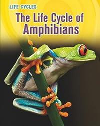 The Life Cycle of Amphibians (Life Cycles (QEB Publishing))