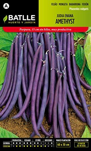 semillas-batlle-020600bols-judia-enana-violeta-amethyst