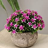 Fenteer Künstliche Gypsophila Bonsai Pflanzen im Topf Kunstpflanze Dekopflanzen Topfpflanzen - Lila - 2