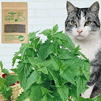 Hanyia 100% Naturel Organique 10g Cataire Attirer les Chats Chatons un Sachet de Herbe a Chat
