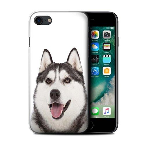 Coque de Stuff4 / Coque pour Apple iPhone 5C / Husky/Esquimau Design / Chiens Collection Husky/Esquimau