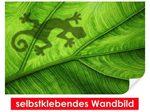 XXL-Tapeten selbstklebendes Wandbild Gecko – leicht zu verkleben – Wallprint, Wallpaper, Poster, Vinylfolie mit Punktkleber für Wände, Türen, Möbel und alle glatten Oberflächen von Trendwände