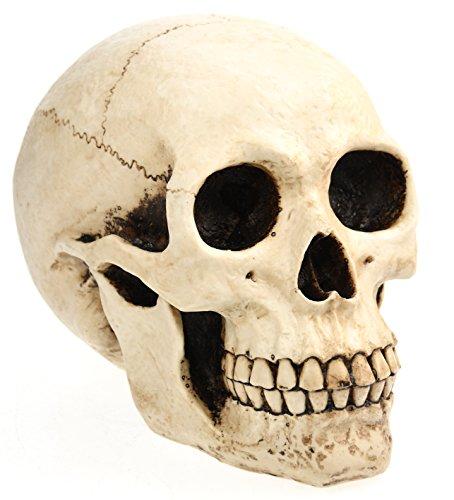 eindrucksvolle XXL Spardose Schädel Skull Totenkopf