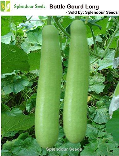 Splendour Seeds Bottle Gourd - Long (30 Seeds)