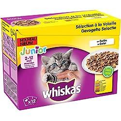Whiskas Junior - Sachets Fraîcheur pour Jeune Chat et Chaton (2-12 Mois), Sélection Mixte en Gelée, 48 Sachets Repas de 100g