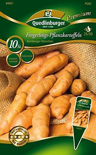 Quedlinburger 84001 Kartoffel Bamberger Hörnchen (10 Stück) (gelb, festkochend, mittelfrüh/mittelspät) (Pflanzkartoffeln)