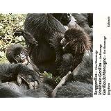Berggorillas. Gorilles de montagne. Mountain Gorillas: Eine Hommage. An Homage. Un Hommage