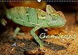 Chamäleons (Wandkalender 2019 DIN A3 quer): Chamäleons - einfach Wunderbar (Monatskalender, 14 Seiten ) (CALVENDO Tiere)