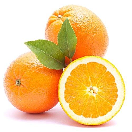 Köstliche und frisch Gourmet spanischen Orangen von unsere Bäume zu Seinen Tisch (10 Kg)