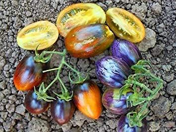 Farmerly 30 Brad's Atomic Grape Tomato Seeds 2018 (All Non-GMO Heirloom Vegetable Seeds!)