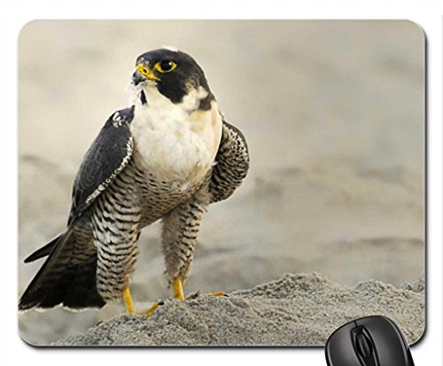 resting-falcon-mouse-pad-mousepad-birds-mouse-pad