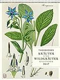 Thorbeckes Kräuterkalender 2017 - Wochenkalender mit 56 Blättern