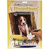 Royal & Langnickel 27,9x 38,1cm Beagle Puppy vorgedruckt Malen nach Zahlen MALEN SET