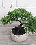 PLANT&STYLE Künstliche Bonsai Kornifere, getopft, 23 cm