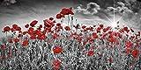 Artland Qualitätsbilder I Glasbilder Deko Glas Bilder 100 x 50 cm Botanik Blumen Mohnblume Foto Schwarz Weiß C5PM Idyllisches Mohnblumenfeld mit Sonne