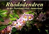 Rhododendren in der Parklandschaft Ammerland (Wandkalender 2020 DIN A3 quer) - N N