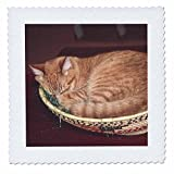 3dRose orange, Design Getigerte Katze Asleep in Einer