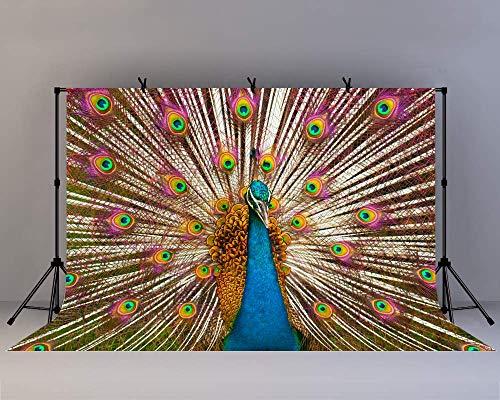 EdCott 10x8ft Pfau Feathe Hintergrund Schöne Pfau Schwanz Hochzeit Wand Hintergründe Traumwald Künstler Schöne Themen Party YouTube Hintergründe Fotostudio Requisiten