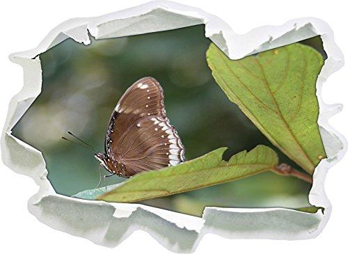 piccola farfalla marrone, carta 3D autoadesivo della parete formato: 92x67