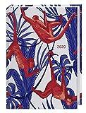 Jungle Monkey Kalenderbuch A5 2020 15,2x21,5cm -