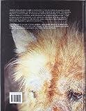 Image de Medicina clínica del perro y el gato