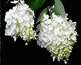 Papier peint blanc hortensia jardin vent TV fond mur salon chambre toile de fond murs peintures murales 3d wallpaper350 * 245cm
