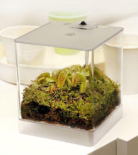 Venus Terrarium (Swampworld Mini Terrarium - Fleischfressende Pflanze mit Beleuchtung - Venusfliegenfalle)