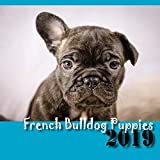 French Bulldog Puppies 2019