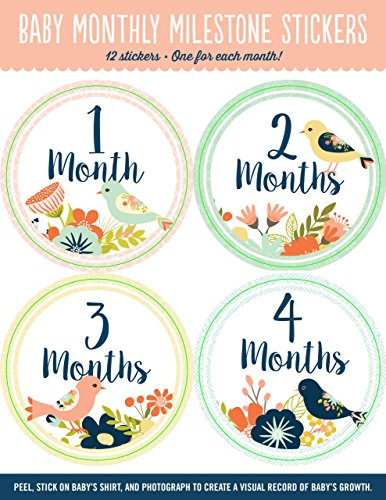 Baby's Monthly Milestone Stickers - Birds: 12 Stickers: One for Each Month!