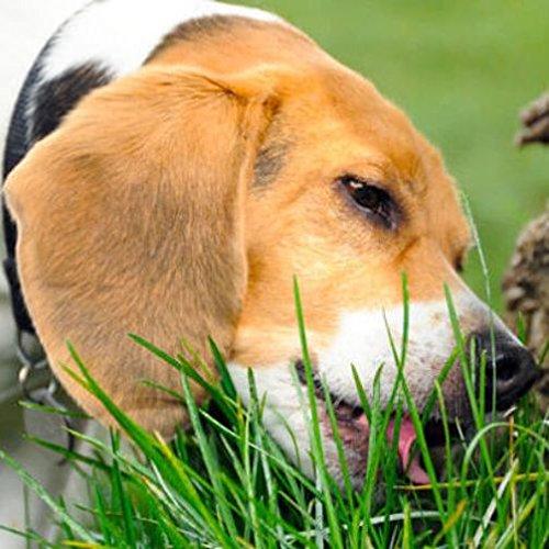 Erba per cane in miscuglio - PER CANI (Semente)