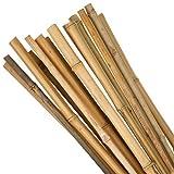 100 cm preenvasados cañas de bambú - 10 Estacas del jardín 1 mt cañas de bambú Natural