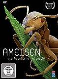 Ameisen - Die heimliche Weltmacht