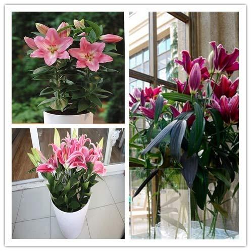 Pinkdose Beauté élégante 100 PU tête artificielle Calla Lily Bouquet de mariée Décorations Restaurant Accueil Nouveau bureau: multi-couleur