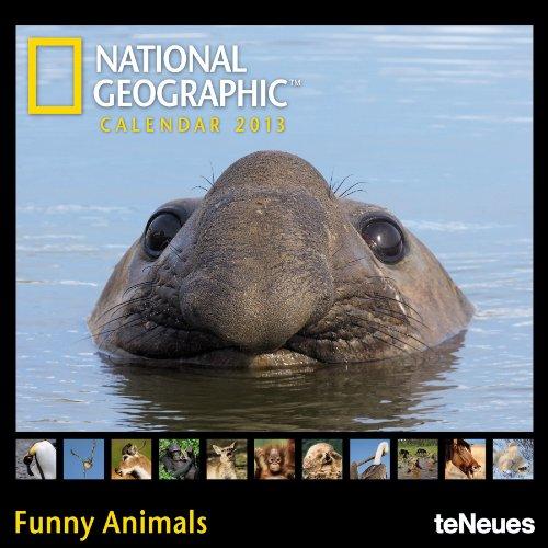 national-geographic-calendar-funny-animals-2013-mini-broschurenkalender