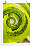Eau Zone Bilder - Naturbilder – Grüner Farn- Leinwand Kunstdrucke Wandbilder aus Deutschland