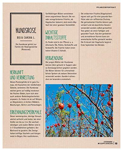 Kräuterkauz: Die faszinierende Welt der essbaren Wildpflanzen - 13