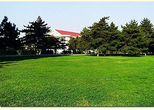 Go Garden Grande promotion de haute qualité Moss Pelouse Herbe Seedsfor mini-jardin frais vert tendre Coureur gazons Plantes Bonsai 60: 5000pcs