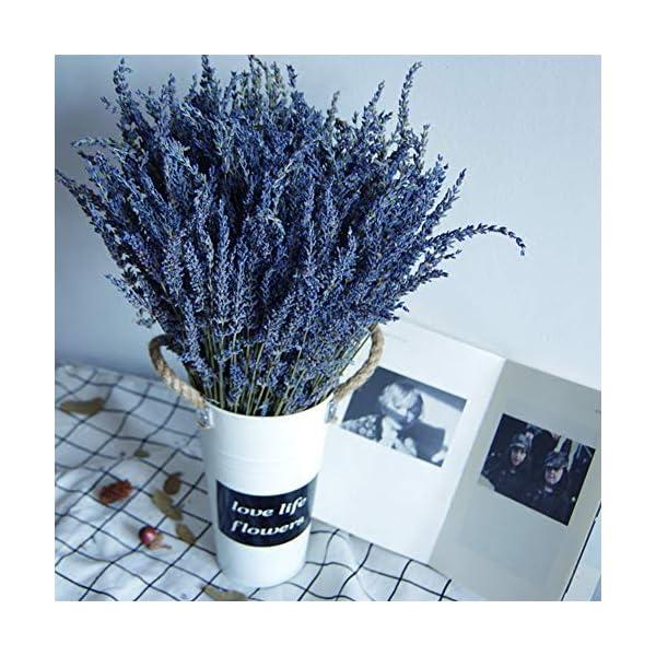 TooGet Flores de Lavanda Natural, Fragante Ramo de Lavanda Seca 100 Se Deriva de 40-45cm de Largo, Flores Decorativas…