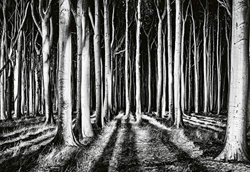 VLIES Fototapete-WALDLICHUNG-(5106)-368x254cm-4 Bahnen-Inkl. Kleister-EASYINSTALL-PREMIUM-Art Fotografie-Tapete XXL Foto-Mural Bild Poster Kunst Schwarz Weiß Steine Strand Wald Bach Abstrakt
