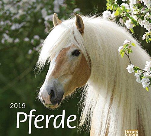 times&more Pferde Bildkalender - Kalender 2019