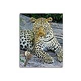 Dalinda Schlüsselbrett mit Design liegender Leopard (20x25cm) Schlüsselboard Schlüsselhaken SB864