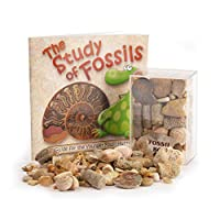 Fossil Box with Study of Fossils Booklet