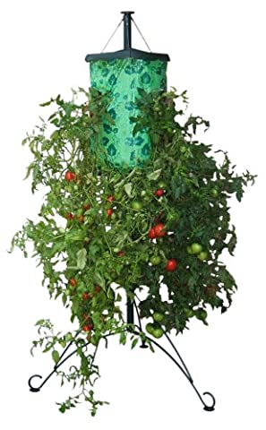 Topsy Turvy Tomato Tree With Steel Stand -''Turning The World