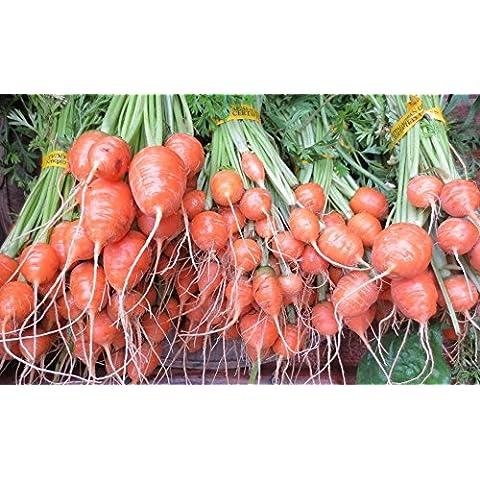 Carota parigino organico - 2,5 gm - circa 2700 semi