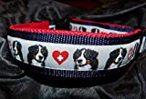 Hunde Halsband Berner Sennenhund