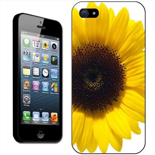 Tournesols Coque arrière rigide détachable pour Apple iPhone modèles, plastique, Yellow Sunflower In Grey Fields, iPhone 5C Close Up Of A Sunflower