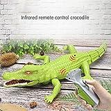 Wokee Creative Simulation RC Crocodile, Infrarot-Fernbedienung Krokodil Alligator Spielzeug Modell Spielzeug Elektronik Spiel Fernbedienung Tier Spielzeug mit Gehen